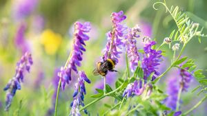 How to make life sweet for bees in your garden